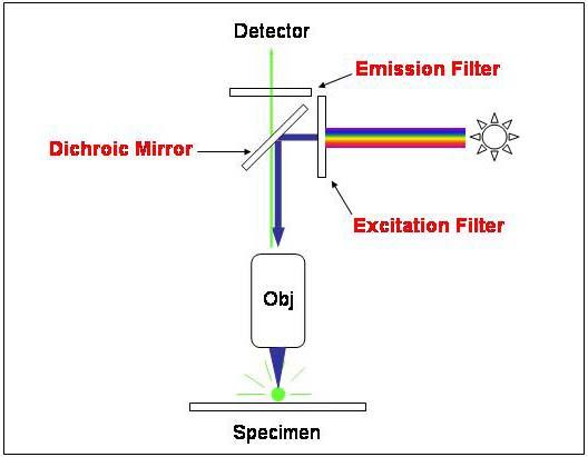 a diagram of microscope parts minitab pareto fluorescent microscopy the filters in