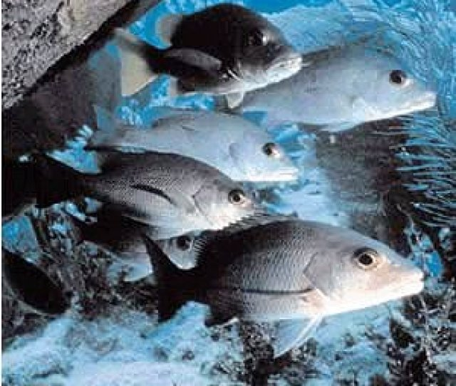 Fish In The Gulf Of Mexico