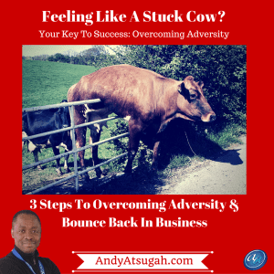 stuck cows_overcoming adversity