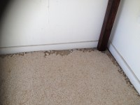 10. We treat for Carpet Beetle - Quality Carpet Care and ...
