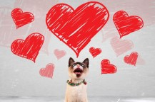 Image result for Valentine dogs for diabetics