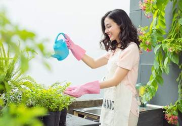 tanaman rumah