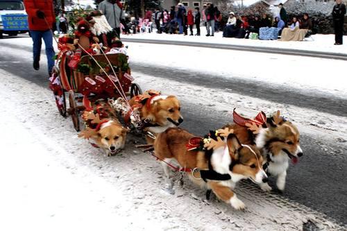 25 Pets All Dressed Up For Christmas Matador Network