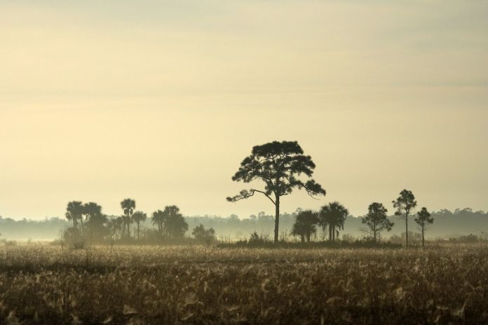 Big Cypress, South Florida