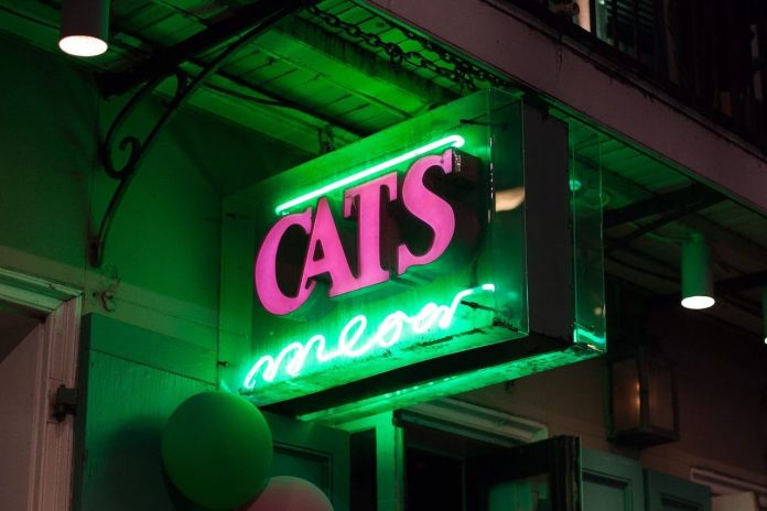 Cats Meow in NOLA