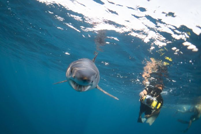 Diving with a Mako Shark of Cabo San Lucas Mexico