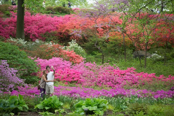 People taking a photo at the New York Botanical Garden