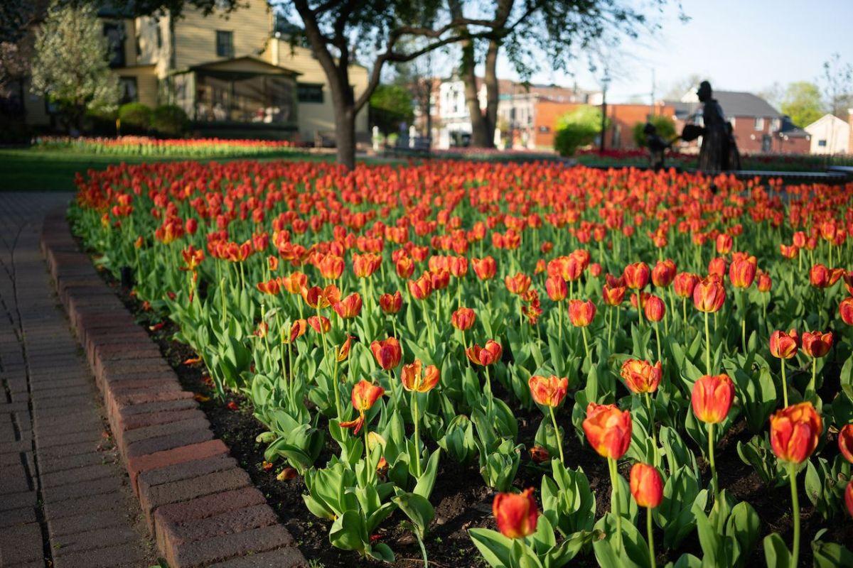 Tulip Time - Pella, IA