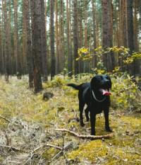 Urlaub mit Hund im Schwarzwald online bei HRS Holidays ...