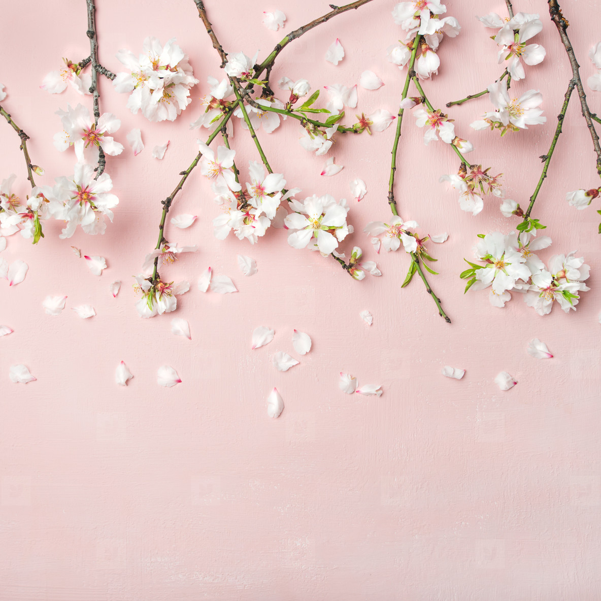 Rose #pink #square #aesthetic #flower image by. Photos - Spring almond blossom flowers over li 170244 ...