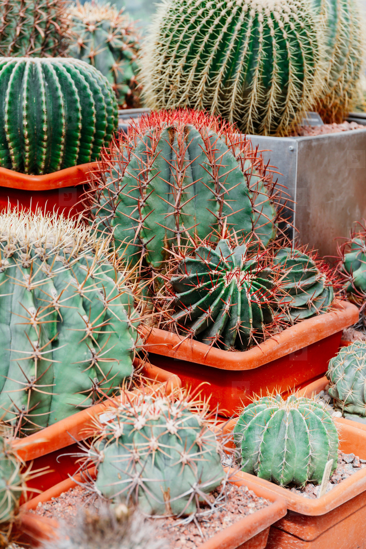 different kinds of cacti