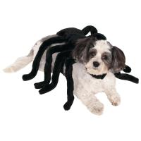 Spider Dog Costume : The Animal Rescue Site