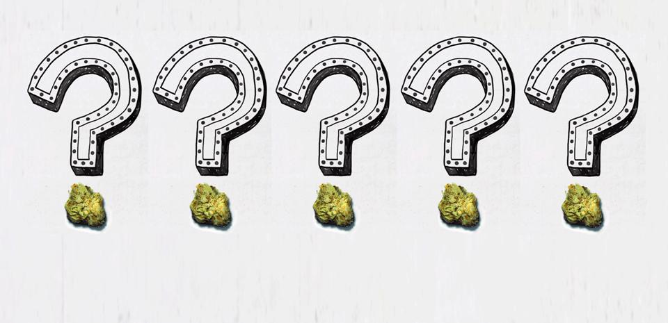 'How Will Marijuana Affect Me?' 5 Basic Cannabis Questions
