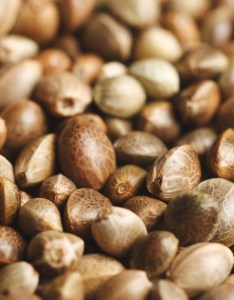 Cannabis seeds all you need to know and more also marijuana  leafly rh