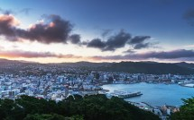 Zealand Moving Slowly Medical Cannabis