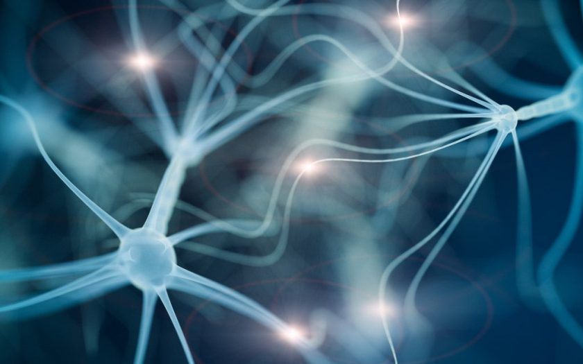 Neuron cell network