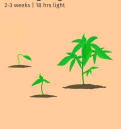seedling stage 2 3 weeks  [ 768 x 1024 Pixel ]