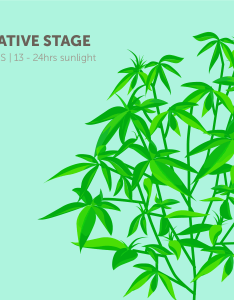 also stages of the marijuana plant growth cycle in pictures leafly rh