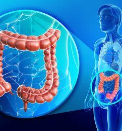 digital illustration of colon anatomy [ 7731 x 5000 Pixel ]