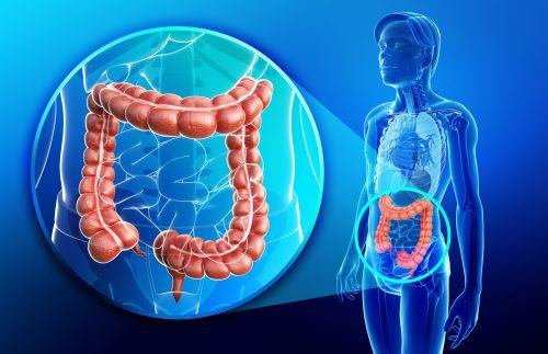 small resolution of digital illustration of colon anatomy
