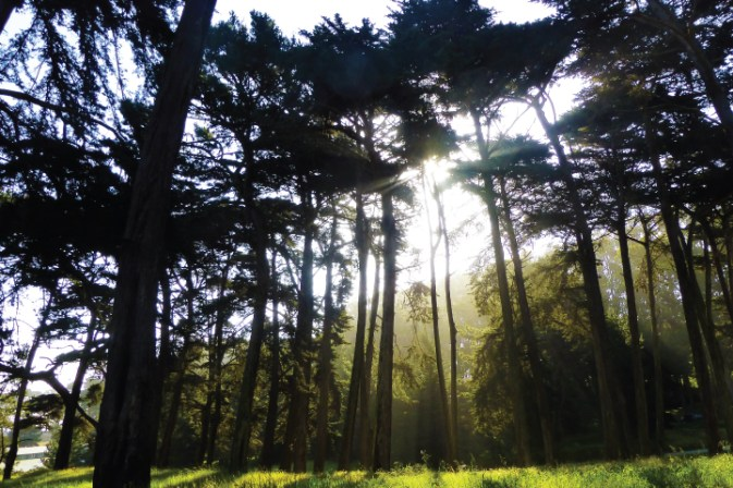 Top 10 Things To See in San Francisco - The Presidio