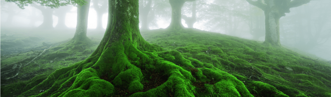 Never Underestimate the Intelligence of Trees