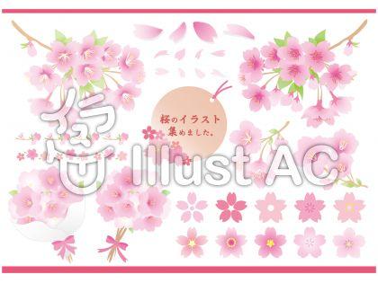 桜満開の無料イラストで春爛漫商用okだからお店の飾り付けpopも作れる