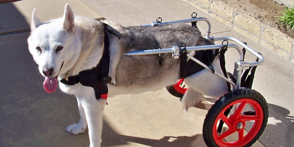 wheel chairs for dogs plush dinosaur rocking chair products page dog center wheelchairs