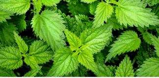 herbal garden uttarakhand