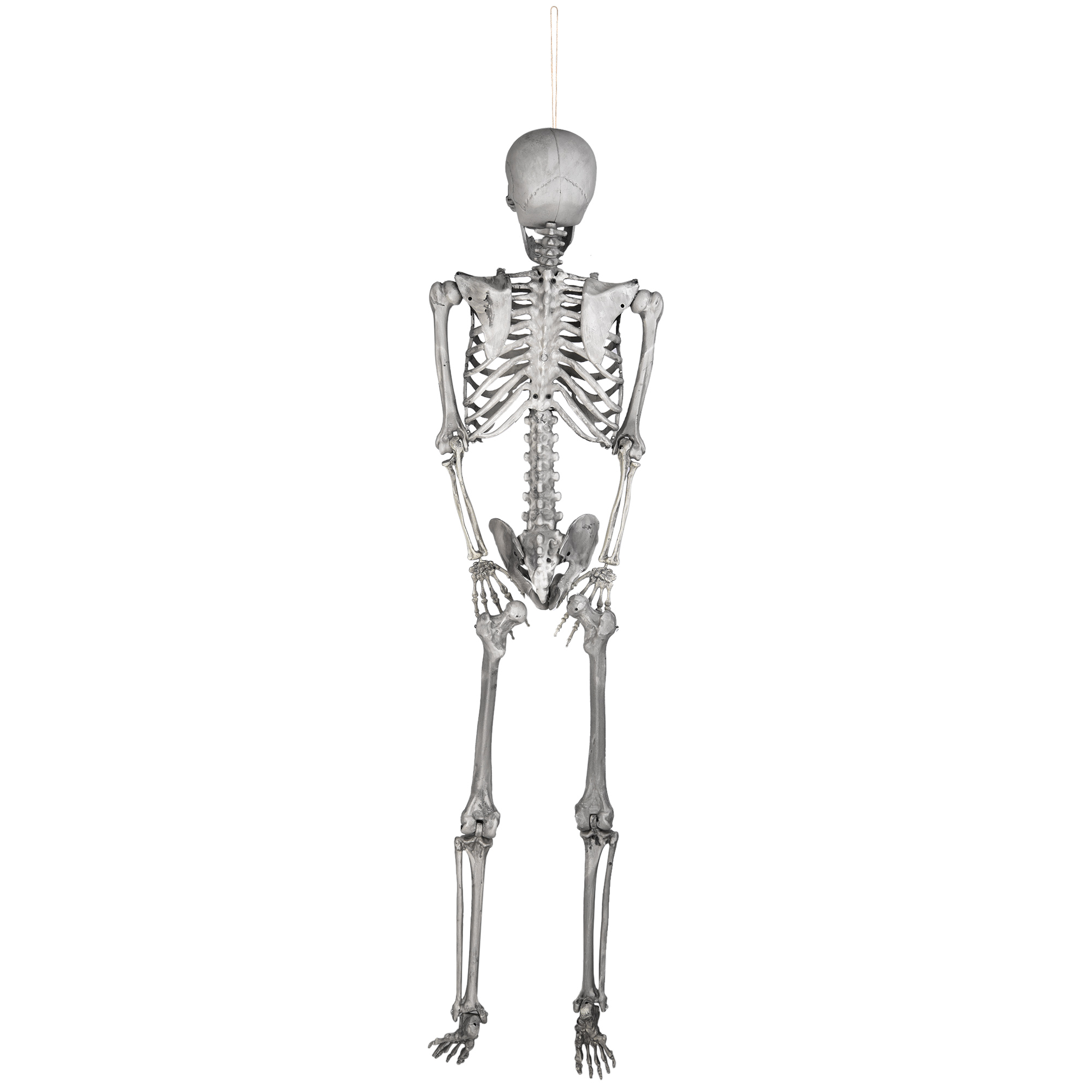 PRE-SALES 5 FT Full Body Skeleton Props Movable Joints