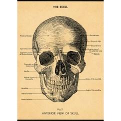 Eye Anatomy Vintage Diagram Bathroom Sink Drain Parts Skull Human Scientific Chart Style Poster