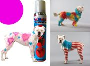 pet paint dog animal safe temporary