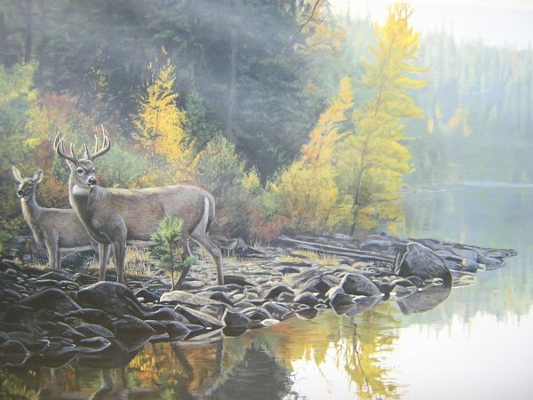 Autumn Whitetail Deer Paintings