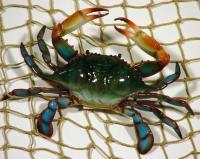 Large Replica Maryland Blue Crab Beach House Wall Decor | eBay