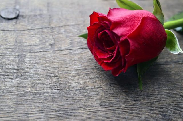 the most romantic love