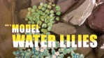 How to Model Water Lilies from Scratch