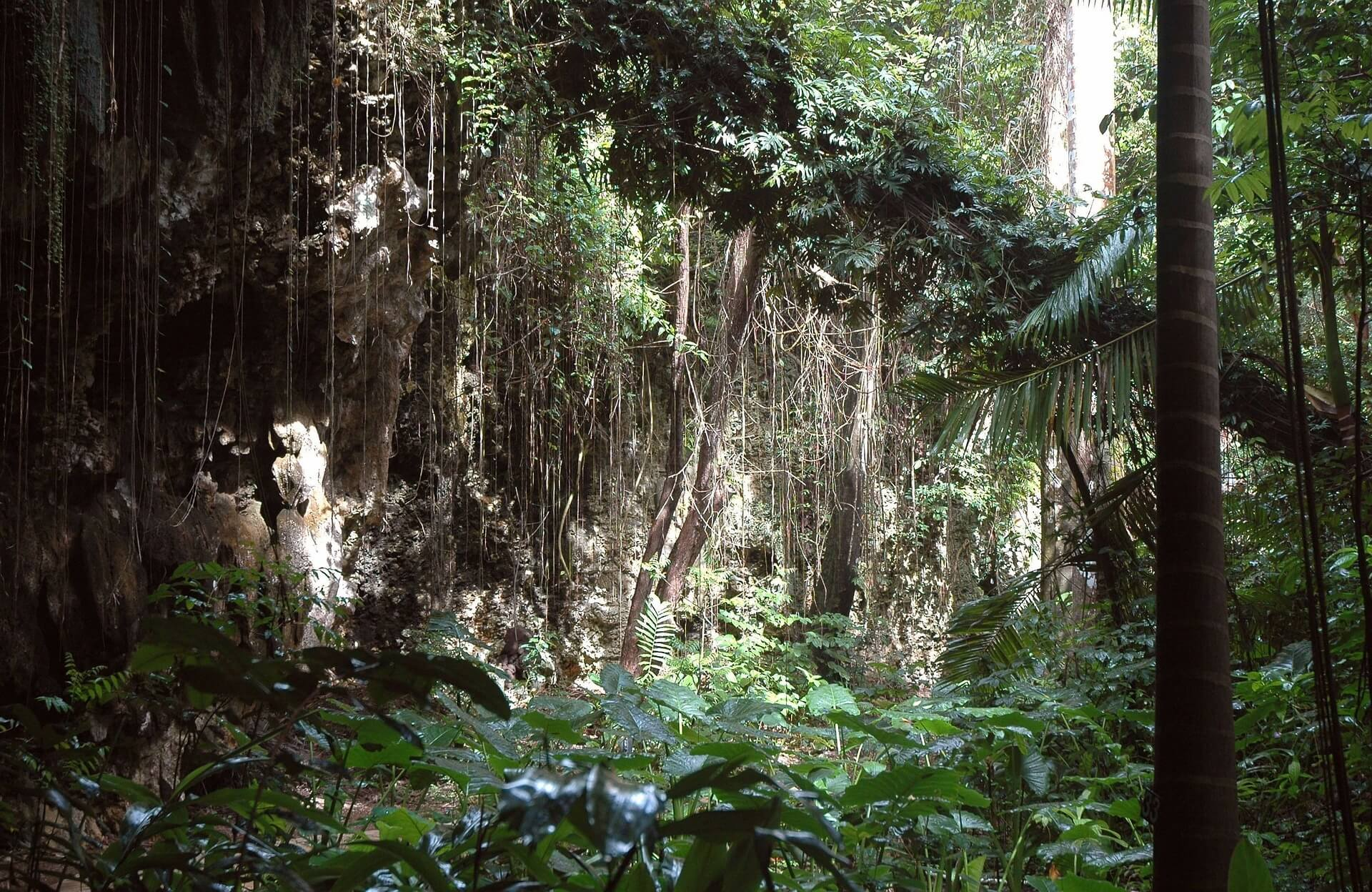 jungle-289137_1920