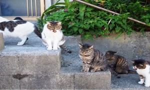 前往博多可當日去當日回之貓島「藍島」看看吧!