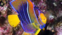 Monterey Bay Aquarium Hotel Package Portola & Spa