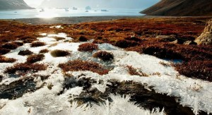 The study presents a large untapped carbon footprint of Arctic permafrost