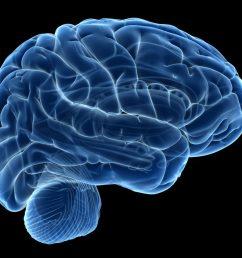 diagram of brain and pain [ 1024 x 768 Pixel ]
