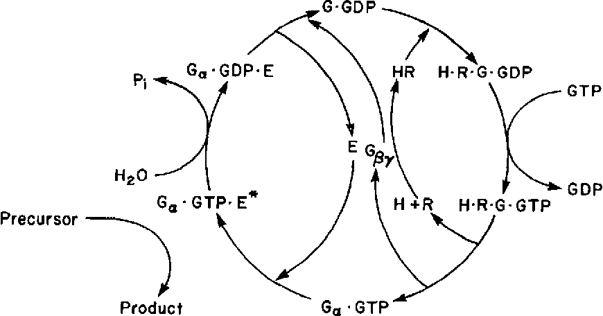 [PDF] G proteins: transducers of receptor-generated