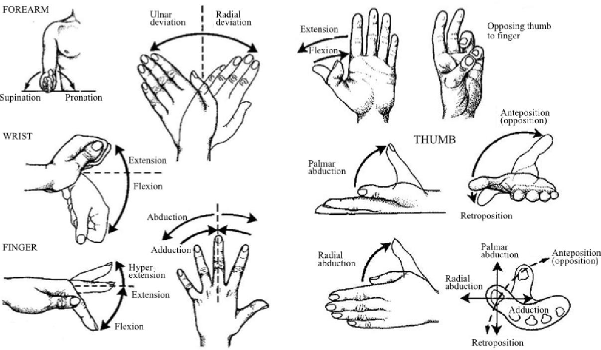 [PDF] A task-oriented robotic hand rehabilitation system
