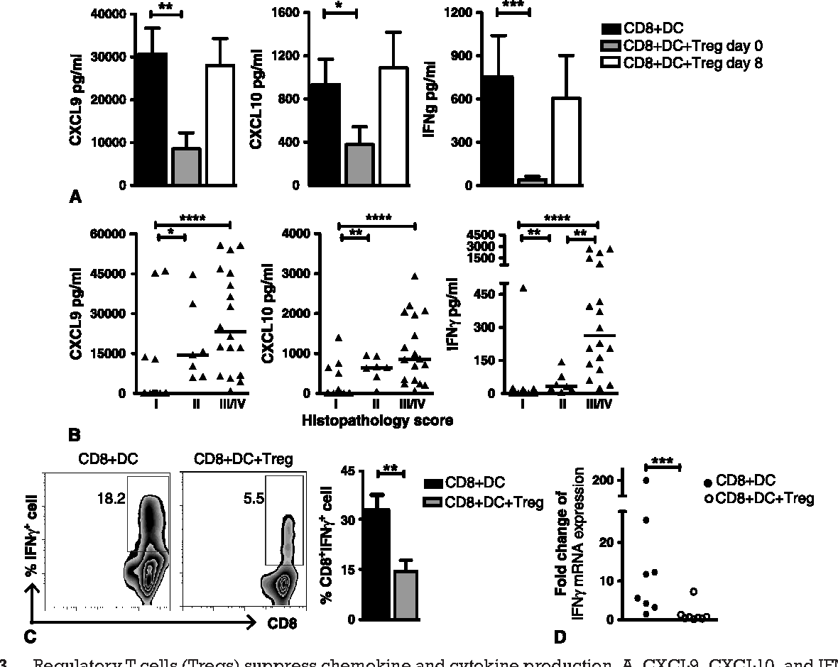Figure 5 from Regulatory T cells inhibit CD8(+) T-cell