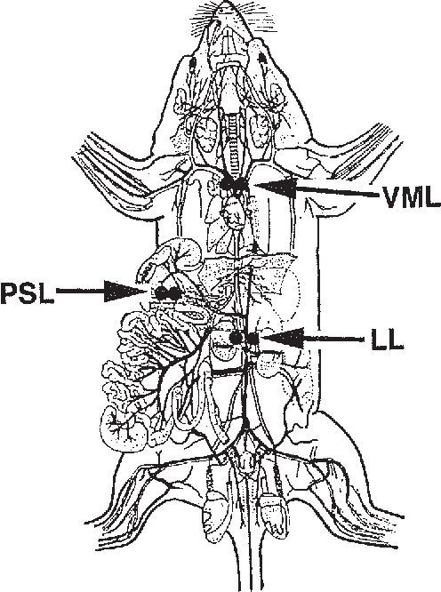 Figure 2 from Structure and function of the hemolymph node