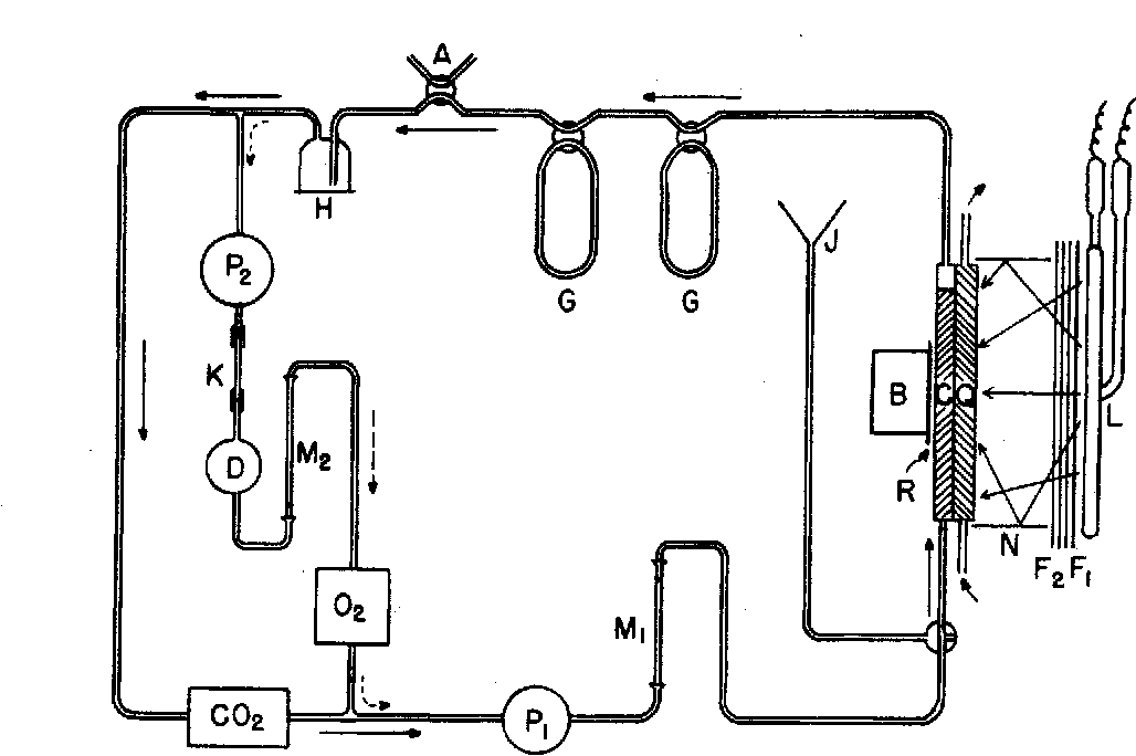 Schematic Diagram Of Photosynthesis And Cellular