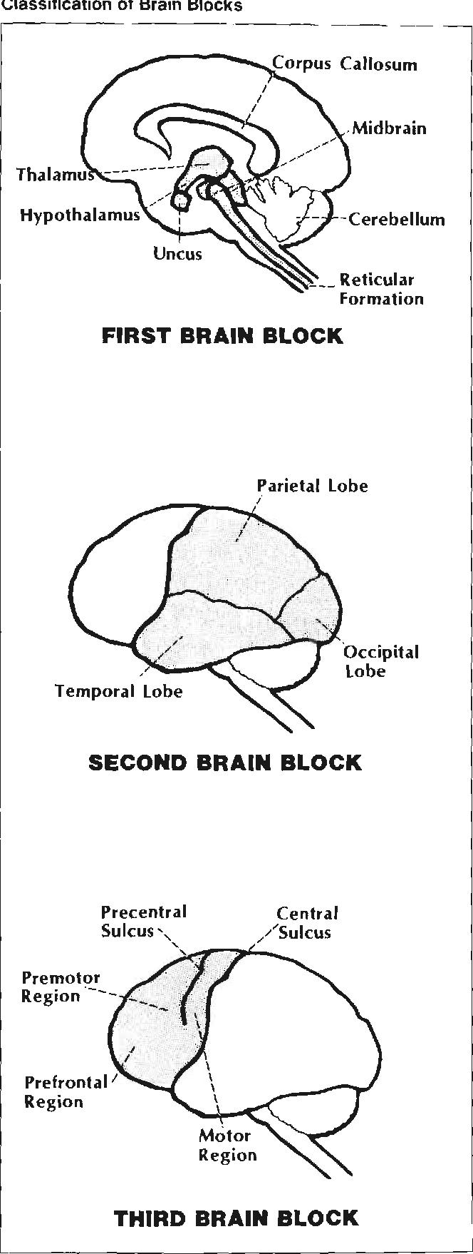 [PDF] Cognitive rehabilitation: a model for occupational