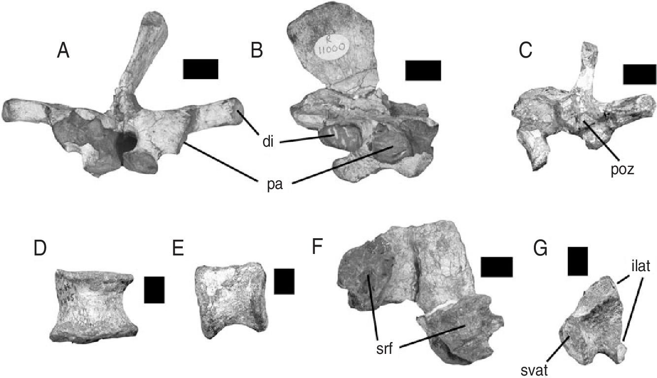 Figure 15 from The 'fabrosaurid' ornithischian dinosaurs