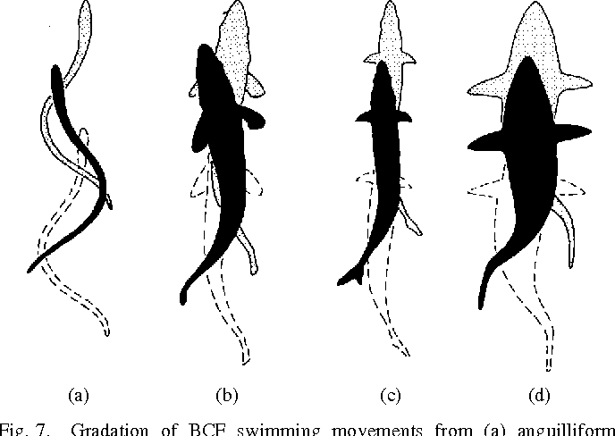 Figure 14 from Review of fish swimming modes for aquatic