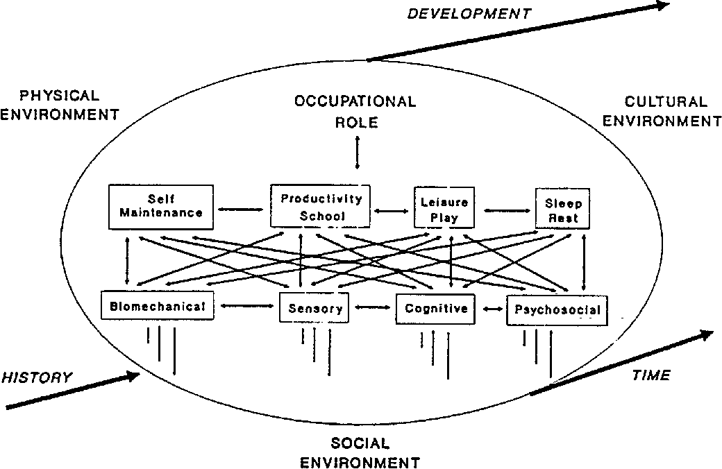 Figure 3 from Towards a model of occupational performance